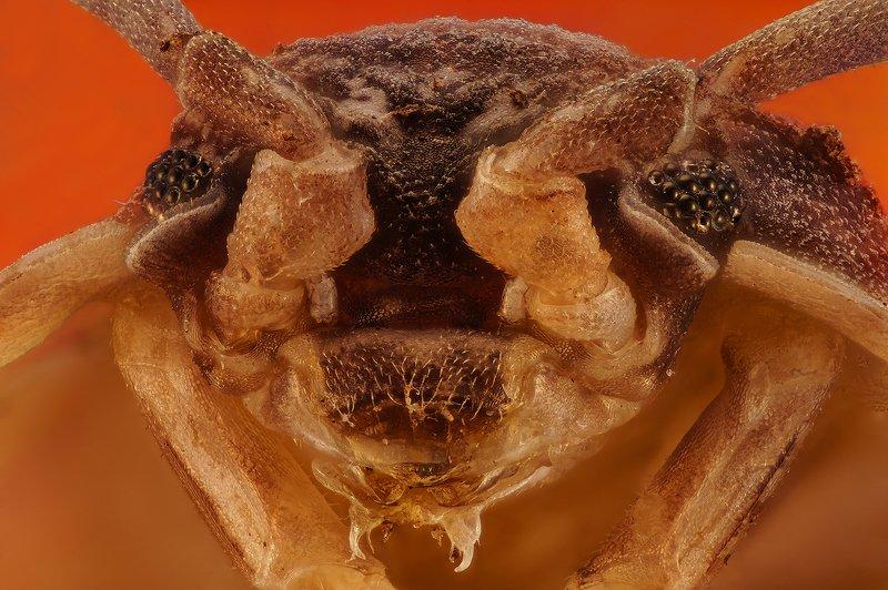 насекомое макро супермакро nikon cfi plan achromat 10x photo preview