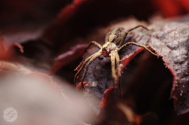 Tokina, Nikon,  Spiderphoto preview
