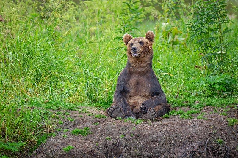 камчатка, медведь, природа, путешествие, фототур Сижу домаphoto preview