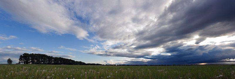 одуванчиковое, поле, под, облаками вот такое вот начало лета . . .photo preview