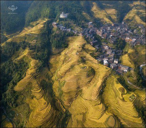 Рисовые террасы Пинь Ан (Китай)