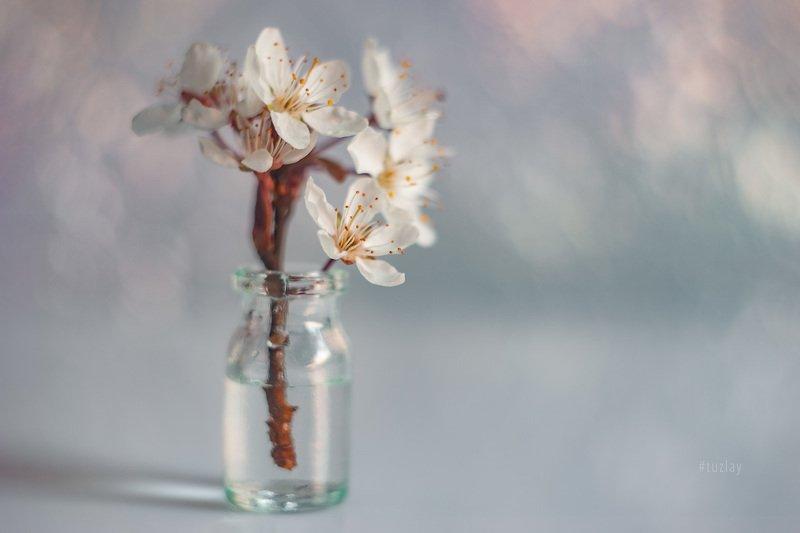 цветки сливы, гелиос 44, боке А вот и слива зацвела!photo preview