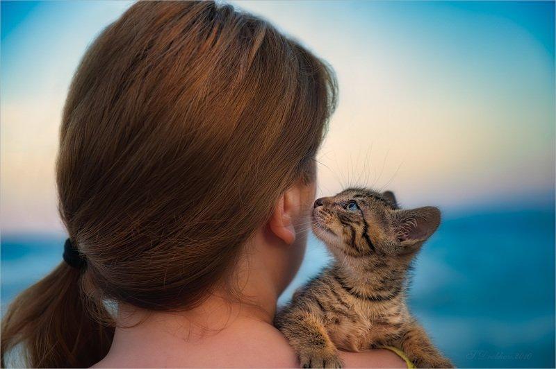 кошки, животные, портрет, закат, море Бирюзаphoto preview