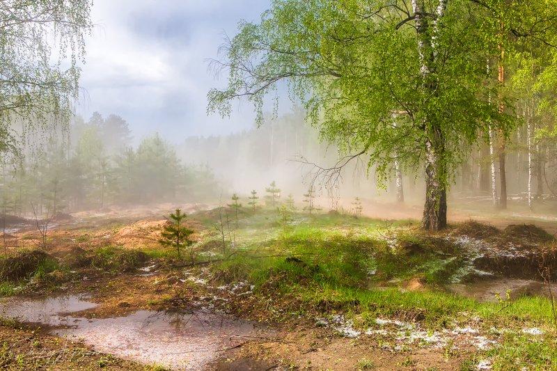 Весенний лес после грозы с градомphoto preview
