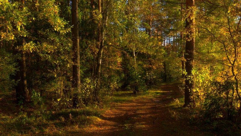 И вспыхнула листва на закате дняphoto preview