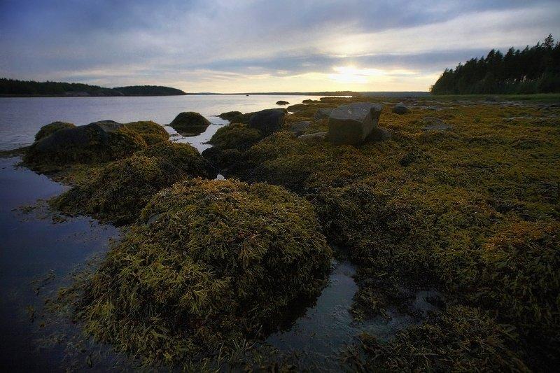 кольский, закат, вода, белые ночи Закат на Белом мореphoto preview