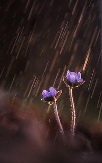 Весной дождь пахнет надеждой