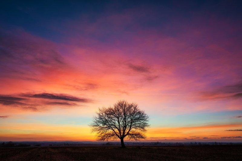 landscape Treephoto preview