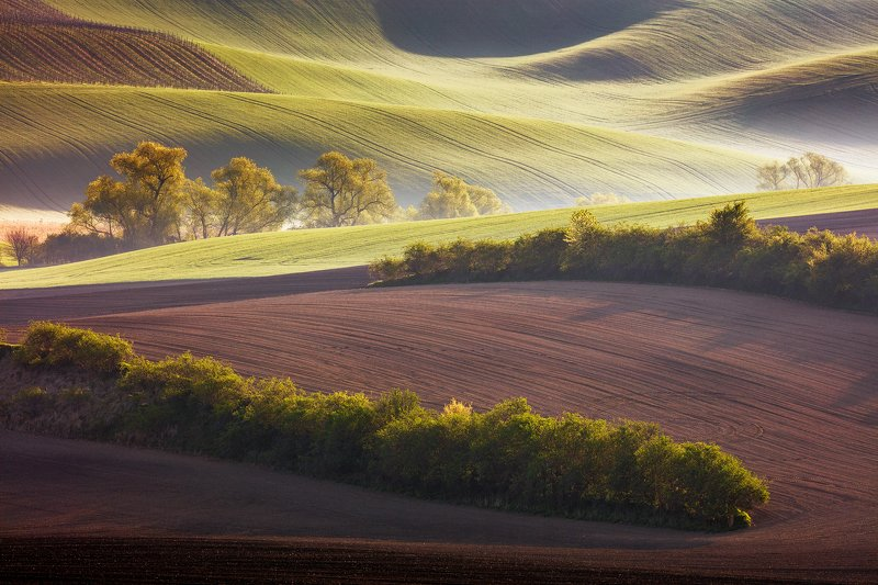 south moravia, czech republic, spring, light, field, countryside, rural, landscape, trees Morning in the Fieldsphoto preview