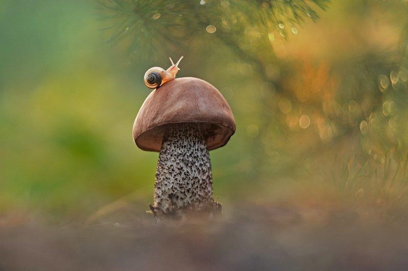 грибы, макро, улитка, закат ***photo preview