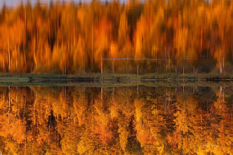 осень отражение деревья вода ###photo preview