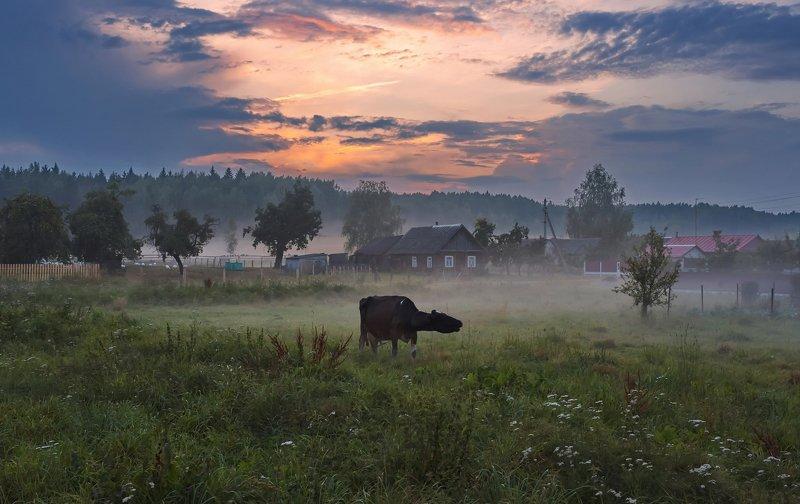 закат, деревня, туман, корова На краю земли...photo preview