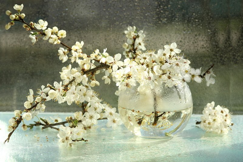 цветы, алыба, ветки Веснаphoto preview