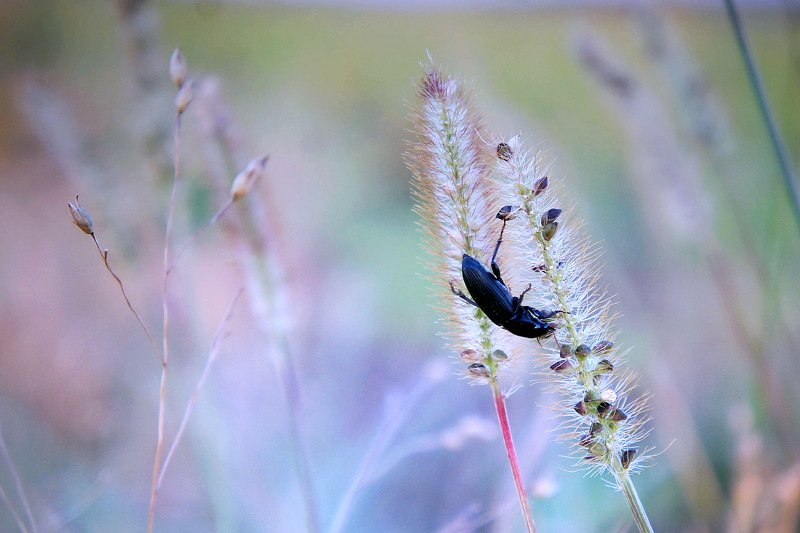 природа лето цветы цветок трава флора красота жук насекомое ***photo preview
