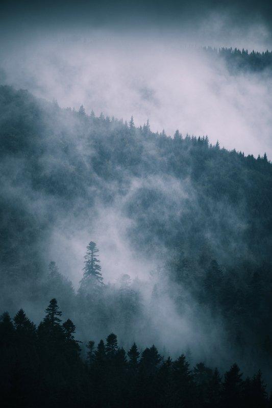 Заоблачные лесаphoto preview