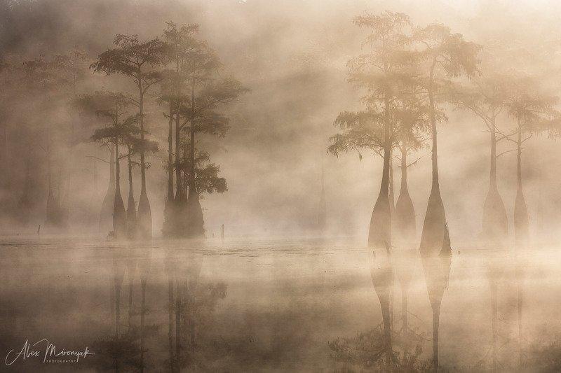 кипарис, болото, озеро, отражение, вода, туман, утро, осень, фото-тур, США Золотой Туман на кипарисовом болотеphoto preview