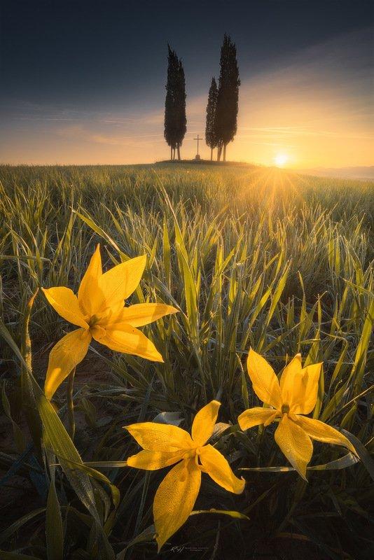 "#landscape #toscana #italy #fineart #sunrise ""Spring awakening""photo preview"