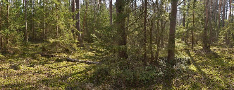 Лес весеннего светаphoto preview