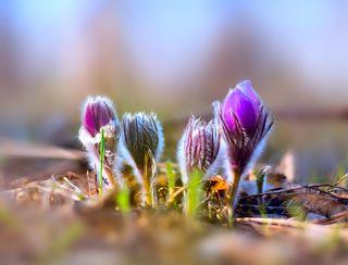Магия весны