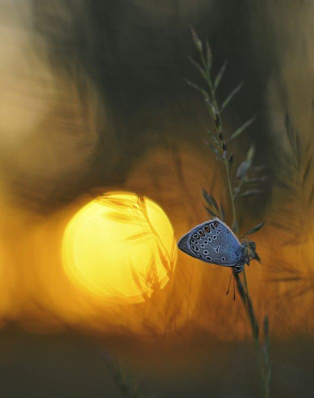 закат, бабочка ***photo preview