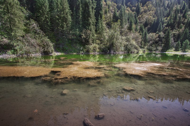 природа озеро лес казахстан Безымянное озероphoto preview