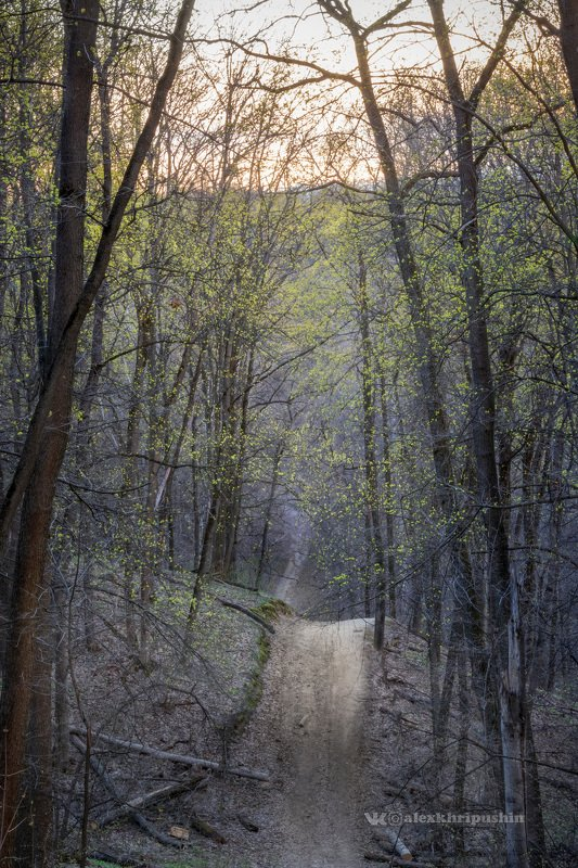 spring sunset landscape trail path tree light Shades of spring sunsetphoto preview