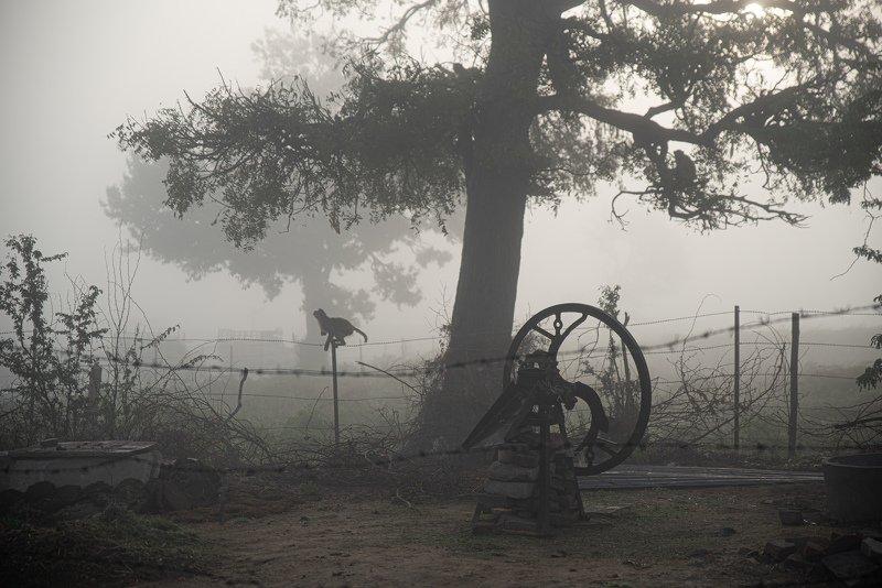 пейзаж туманное утроphoto preview