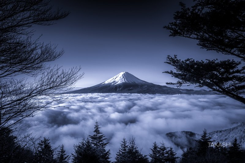 Fuji,Japan,mountain,forest,cloud,tree, Beyond the Forestphoto preview