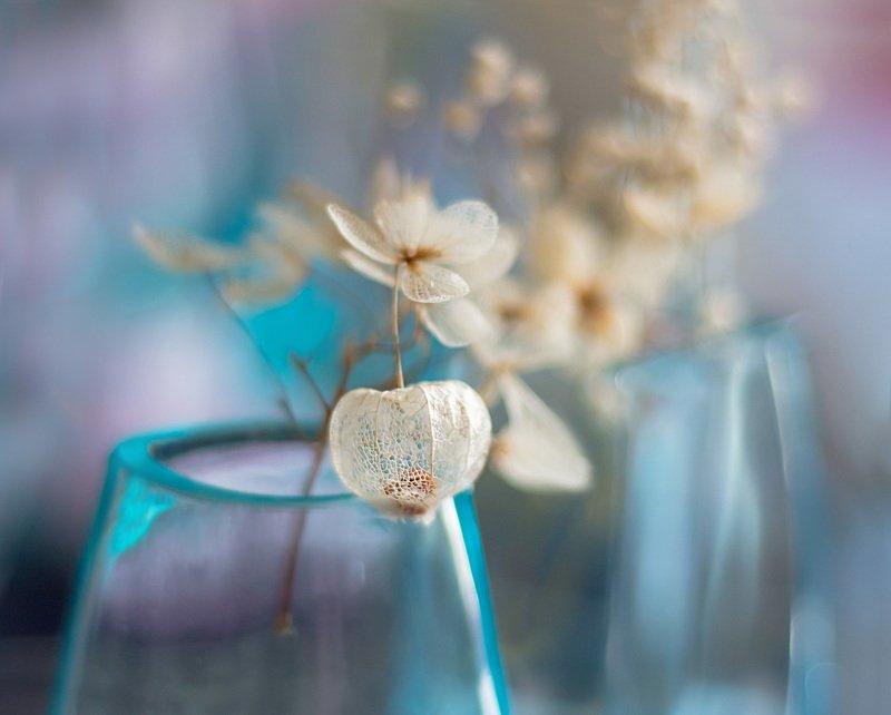 макро,вазы, Карантинное... от скуки.photo preview