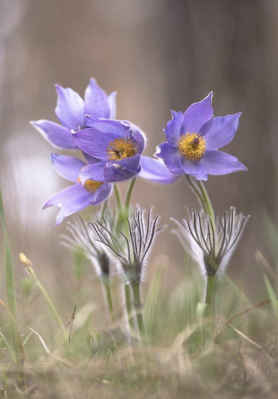 сон трава, апрель, весна, позитив, цвет, свет, воронеж, геннадий мещеряков Разбуженные сны...photo preview