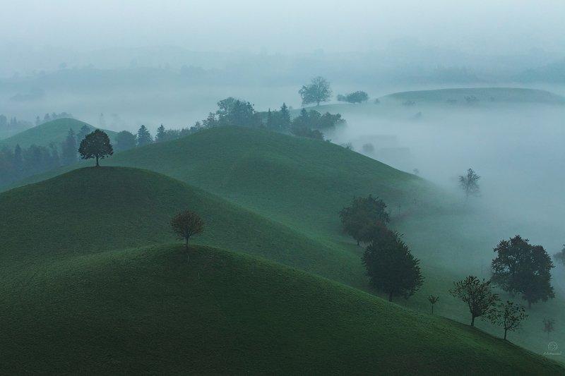 туман, природа, холмы, деревья, воздух, пейзаж, минимализм, путешествия В объятиях тумана / Switzerlandphoto preview