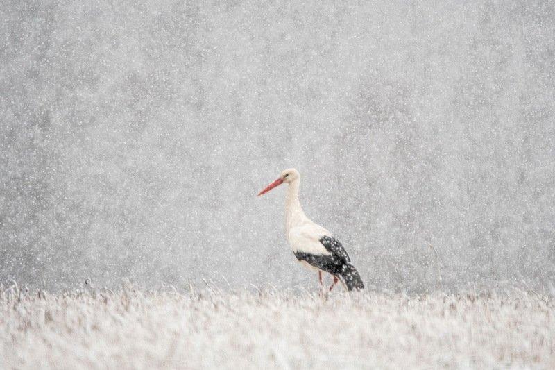 Апрельский снегопад.photo preview