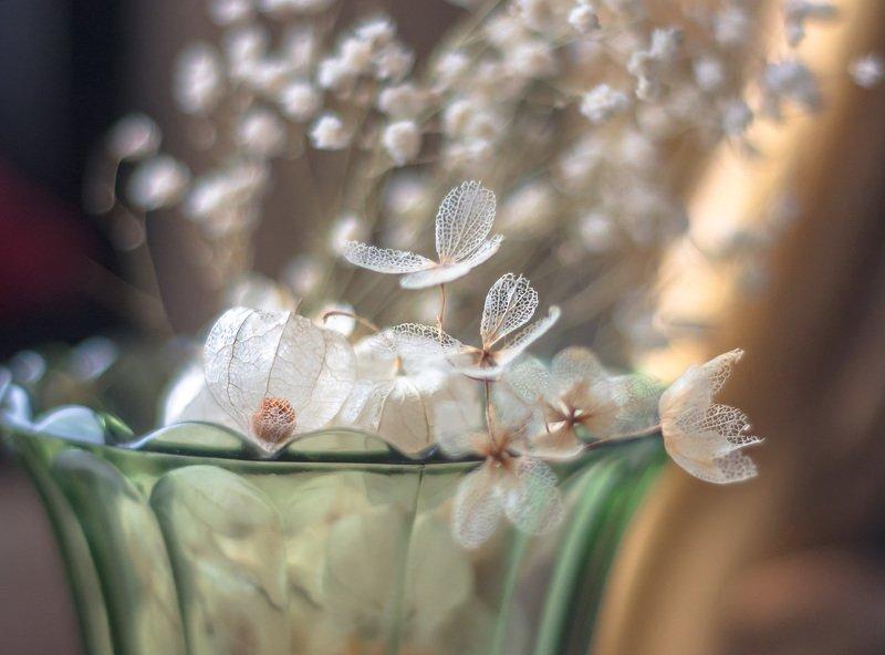 макро,композиция,сухоцветы,неживая природа, Мотылькиphoto preview