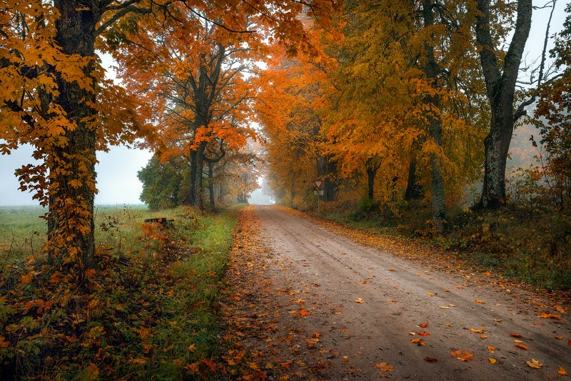 autumn with roadphoto preview