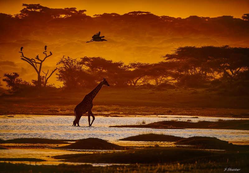 Sunset, Tanzaniaphoto preview