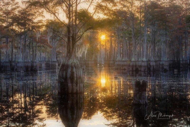 кипарис, болото, озеро, отражение, вода, туман, утро, осень, фото-тур, США Кипарисовый рассветphoto preview