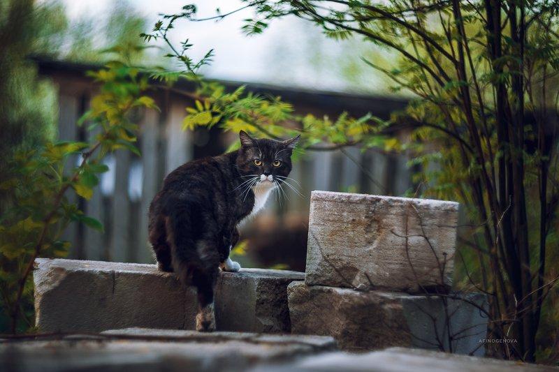 назаборныекоты гелиос весна Назаборные котыphoto preview