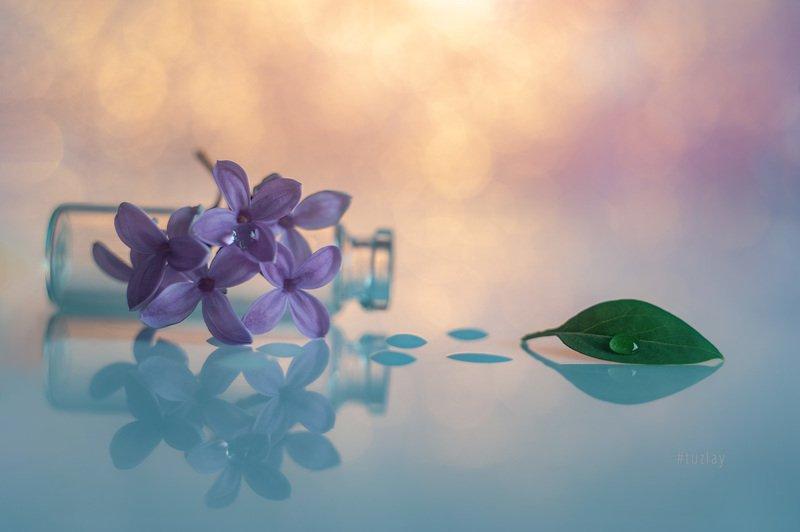 сирень, боке, гелиос 44 Апрельские фантазии с сиреньюphoto preview