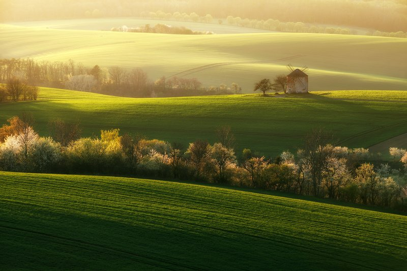 spring, field, landscape, blooming, green, sunset, moravia , czech republic Blooming springphoto preview