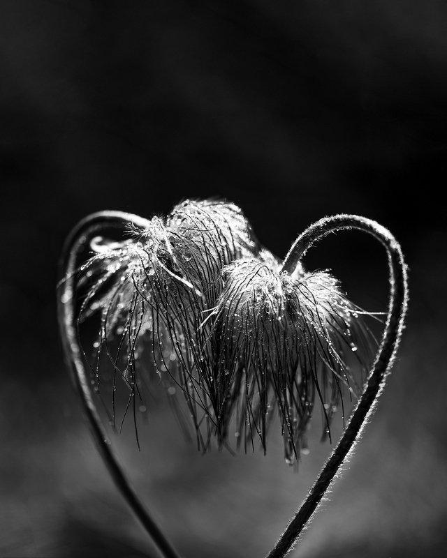 macro, nikon, nature,sigma, цветы, макро, боке Love youphoto preview