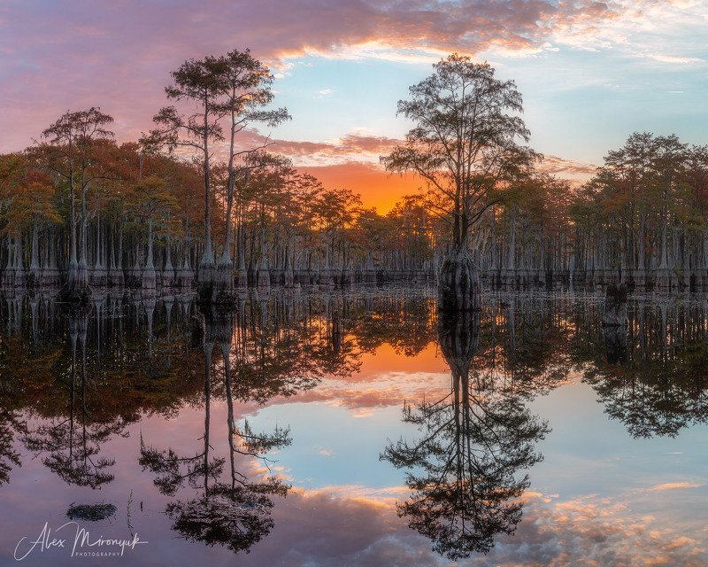 кипарис, болото, озеро, отражение, вода, туман, утро, осень, фото-тур, США Утренняя зорька на кипарисовом озереphoto preview
