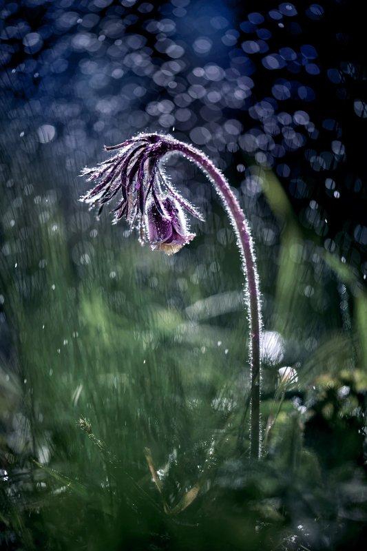 макро, макрофото, улитка, гриб, дождь, лес, природа, капли, никон, сигма, гелиос, macro, macro, snail, mushroom, rain, forest, nature, drops, nikon, sigma, sigma105, Сон-траваphoto preview