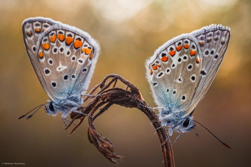 утро,стекинг,бабочка, ***photo preview