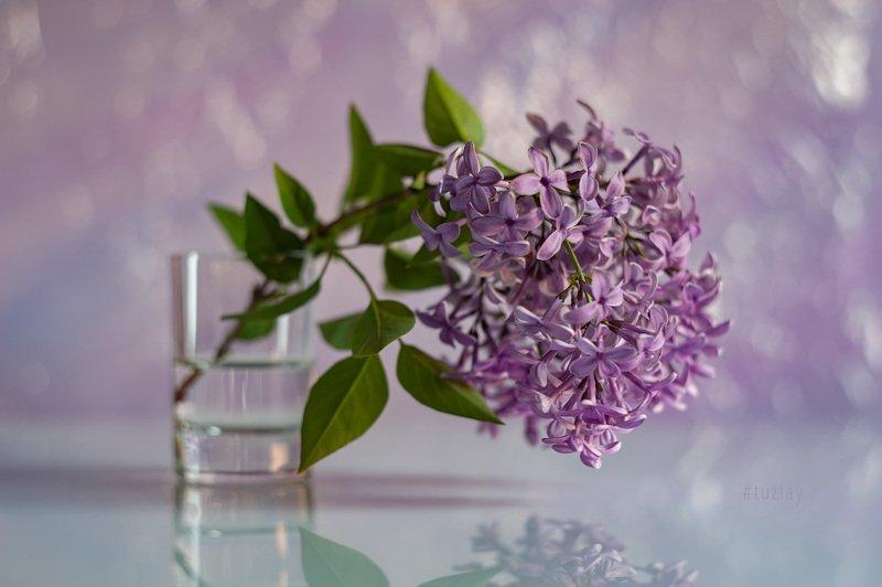 сирень, сирень в стакане, весна, цветки сирени, гелиос 44 И вновь про сирень...photo preview