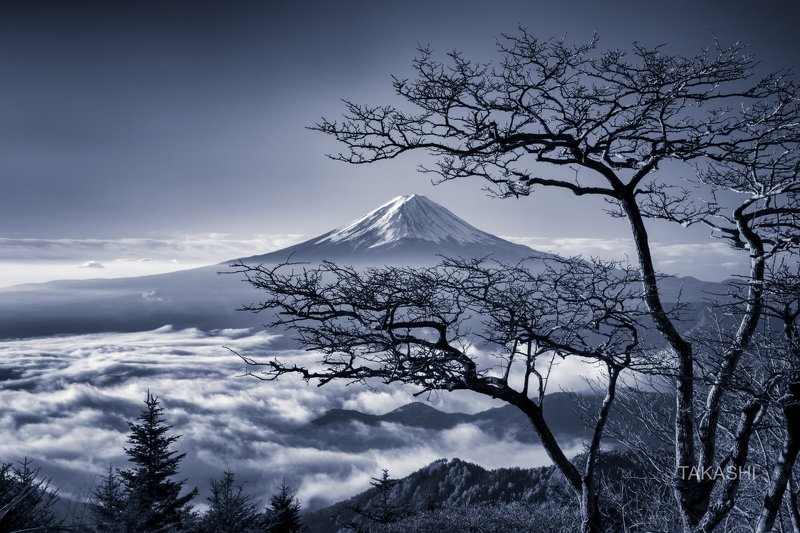Fuji,Japan,mountain,clouds,tree,bonsai,snow,blue The spirit of the treephoto preview