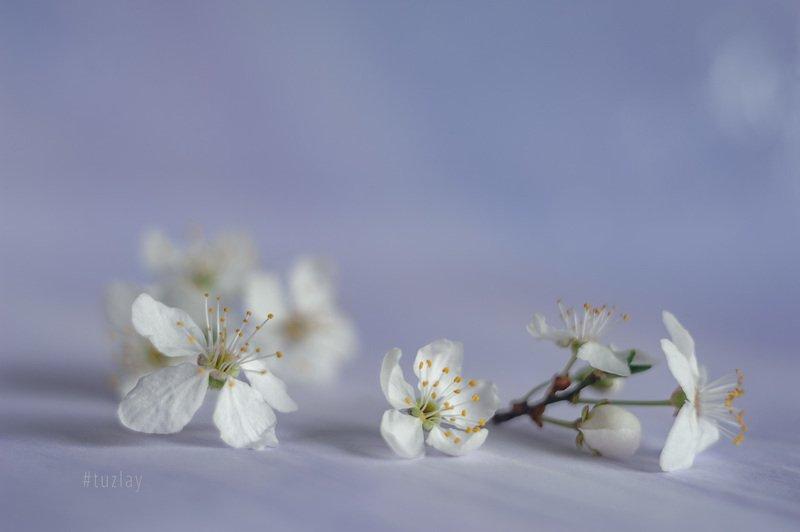 первоцвет, гелиос 44 Фантазии из марта по апрельски...photo preview