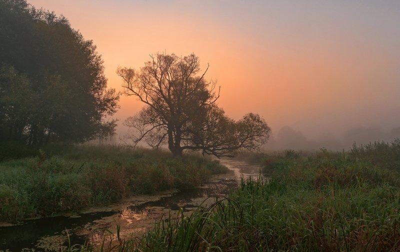 утро, туман, пейзаж Утро зажигаетсяphoto preview