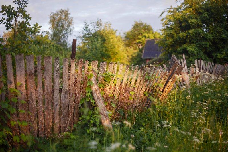 утро, лето, забор, гелиос Деревенский заборphoto preview
