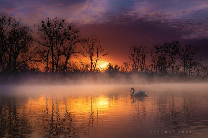 лебедь , озера,zanfoar,landsape,чехия, солнце,никон d750,czech republic Лебединое озероphoto preview