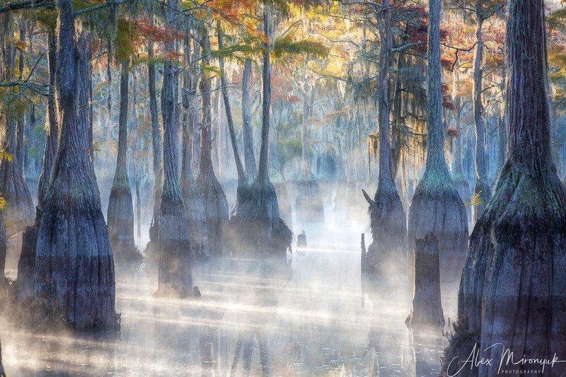 кипарис, болото, озеро, отражение, вода, туман, утро, осень, фото-тур, США Кипарисовый туманphoto preview